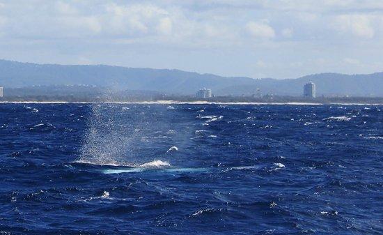 Sea World Whale Watch: Whale