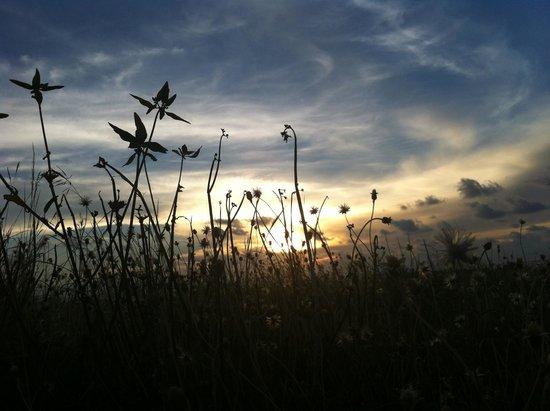 Avillion Layang Layang: Evening at the grassland beside runway