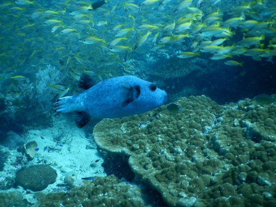 Merlin Divers - Kamala Diving Center: Lots of fish life around Phi Phi