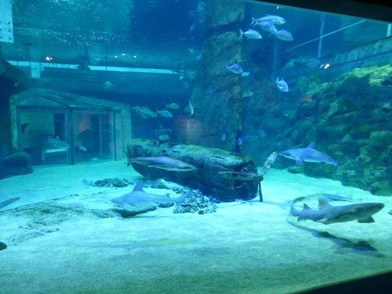 aquarium tactile fotograf 237 a de seaquarium le grau du roi tripadvisor