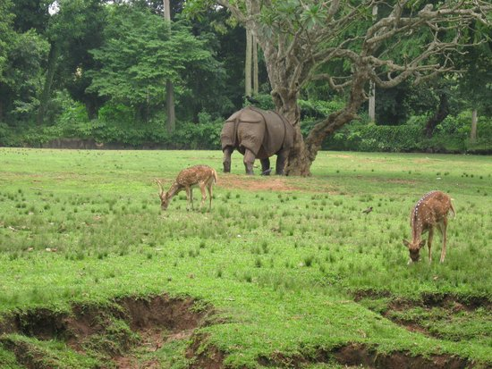 Kaziranga National Park, Hindistan: Rhino and dear