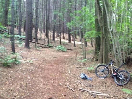 Krank Cycles : photo stop during my climb in Makawao Forest reserve.