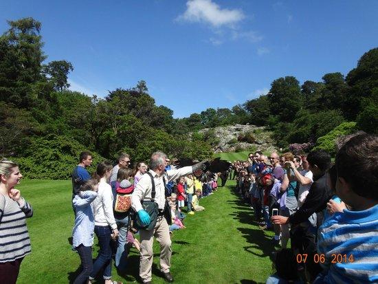 Killruddery House & Gardens: Falconry Show