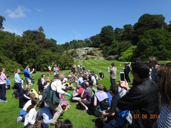 Killruddery House & Gardens: Falconry Show