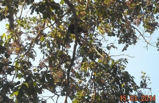 Periyar Lake: BIG SQURAL ON THE TREE