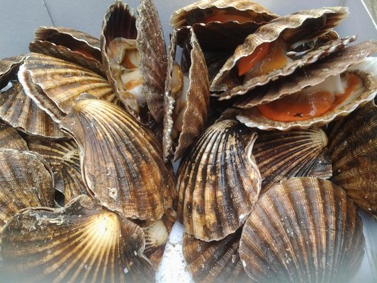 Treebus: hand dived scallops