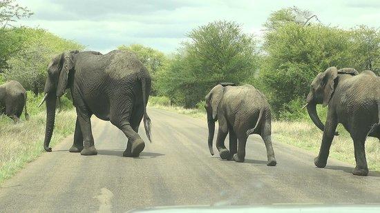 Protea Hotel by Marriott Kruger Gate: Kruger Gate => Crocodile Gate