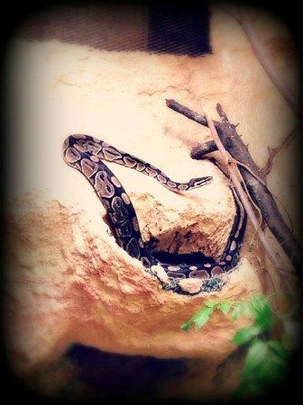 Le Refuge de l'Arche : Python