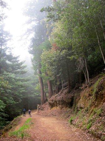 El Corte De Madera: Merge of Fir and Giant Salamander trails