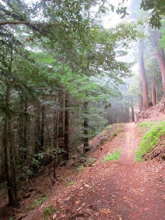 El Corte De Madera: Foggy trail
