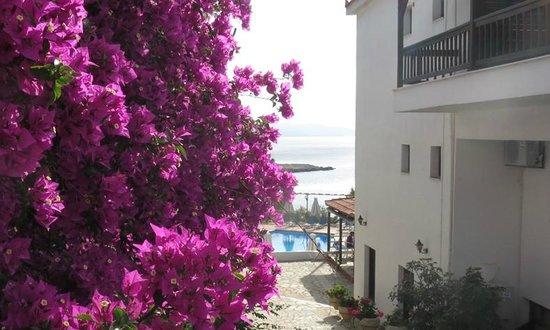 Paradise Hotel - Alonissos: Entrance view, Paradise Hotel, Alonissos