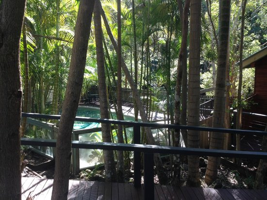 Kondalilla Eco Resort : View of pool from outside room