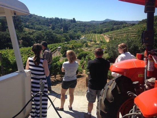 Benziger Family Winery : Breathtaking vineyard tour