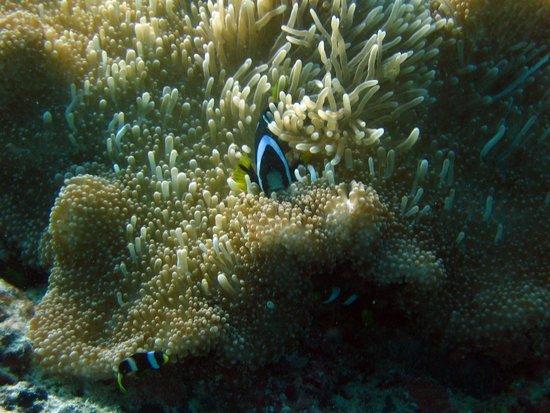 Reethi Beach Resort: Nemo