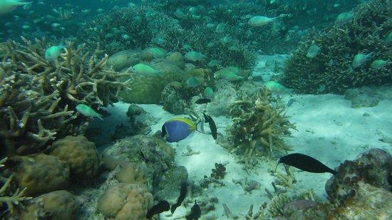 Constance Moofushi : Amazing house reef!!