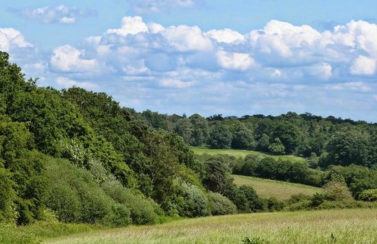 Enfield, UK: View across hay meadows, Trent Country Park