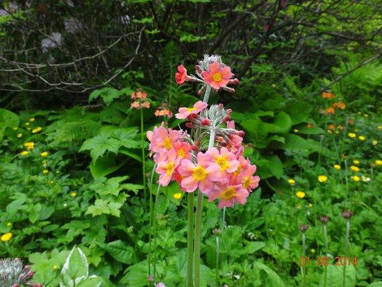 Powerscourt Gardens and House: Powerscourt Gardens in County Wicklow