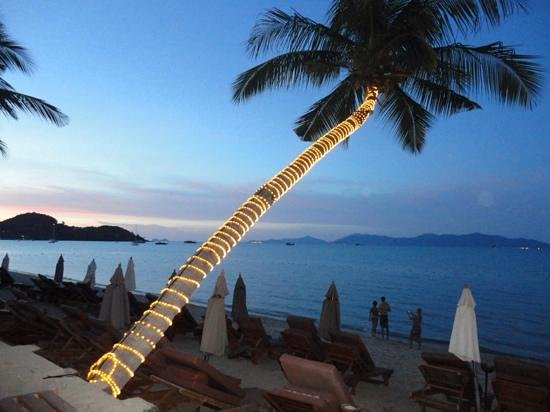 Bandara Resort & Spa : beachside