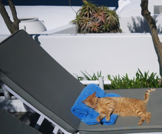 Remezzo Villas: One of the resort cats making itself at home
