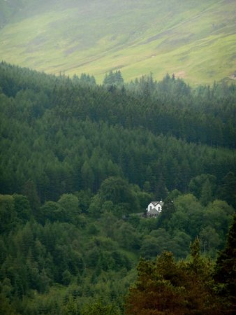 The Cottage in the Wood : The Cottage from the forest