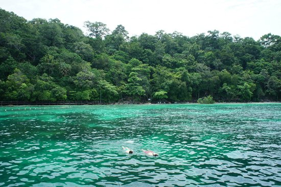 Langkawi Coral: The snorkeling area.