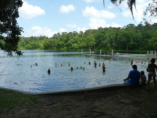 Alfred B. Maclay Gardens State Park : swimming in the lake