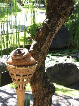 Sol Beach House Benoa Bali by Melia Hotels International : местная белка