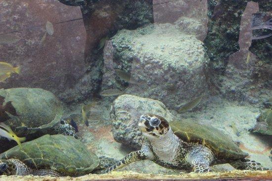 Underwater Observatory Marine Park : pesci