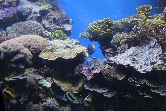 Underwater Observatory Marine Park : vasche