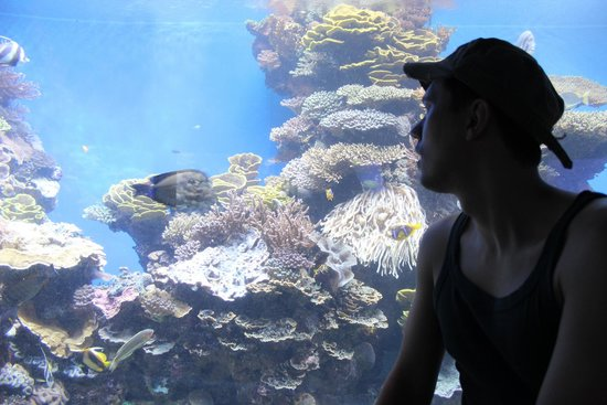 Underwater Observatory Marine Park : Me & the reef
