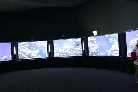 Underwater Observatory Marine Park : Dentro l'osservatorio