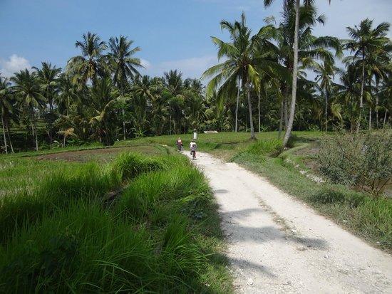Bali Breeze Tours: biking