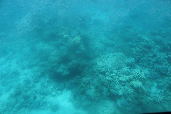 Underwater Observatory Marine Park : Nemo experience