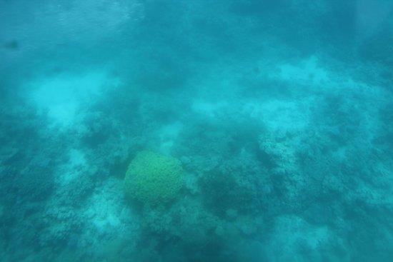 Underwater Observatory Marine Park : In the submarine