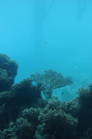 Underwater Observatory Marine Park : Under the sea