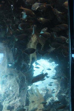 Underwater Observatory Marine Park : Nell'abisso