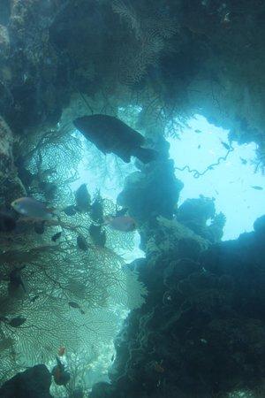 Underwater Observatory Marine Park : In Fondo al mar...