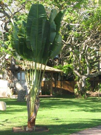 Arraial D'Ajuda Eco Resort: Jardins do hotel