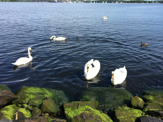 Hotel J: Swans