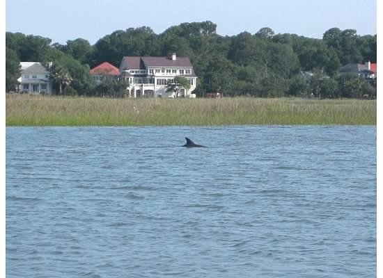 Crabber J: Dolphin we saw
