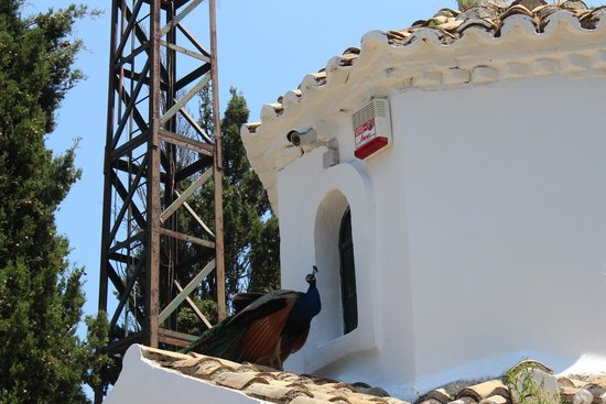 Mazis Apartments: Pfauen auf Mouse Island