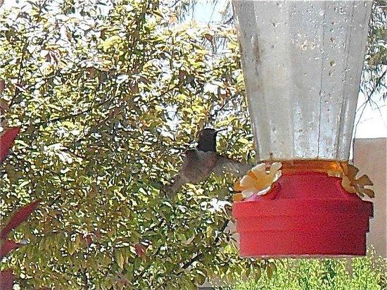 Dreamcatcher Bed & Breakfast : Himmingbird