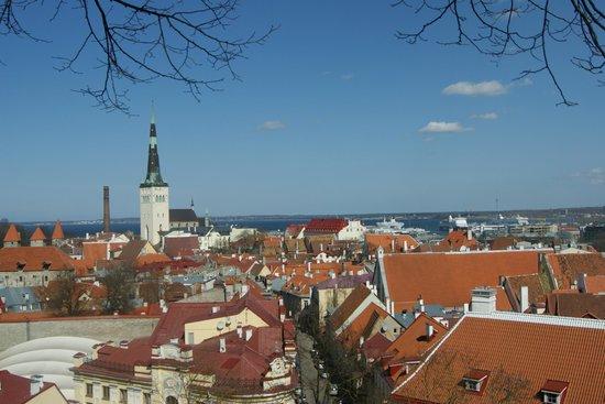 Tallinn Old Town: Вид со смотровой площадки