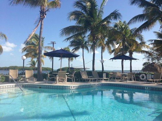Coconut Palm Inn : Pool morgens