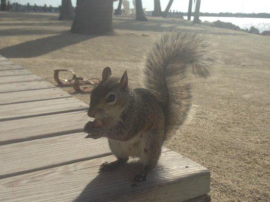 Coconut Palm Inn : Squirrel