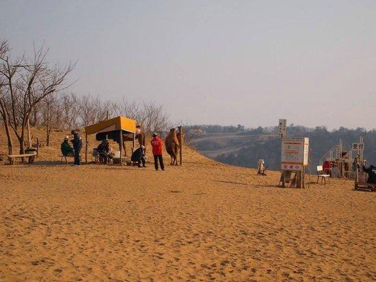 Tottori Sand Dunes : camel, so cute.