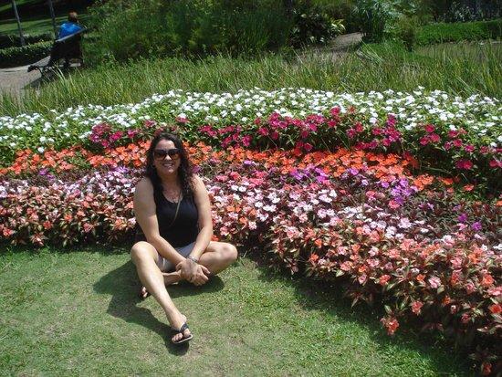 Jardim Botanico de Sao Paulo: Flores lindas e coloridas.