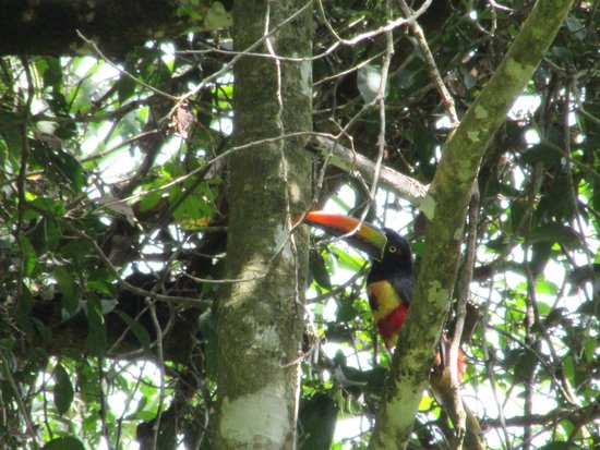 Playa Manuel Antonio: Lovely Toucan