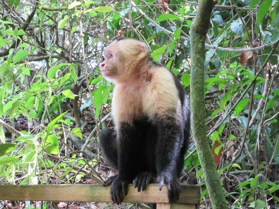 Parque Nacional Manuel Antonio: Taking in the view