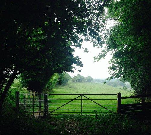 Red Rail Farm: walk